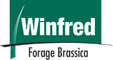 Winfred Forage Brassica