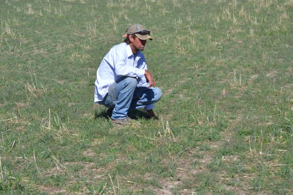 Bernard McRae inspects a mixed Uplands Hispanic Cocksfoot pasture | AusWest & Stephen Pasture Seeds