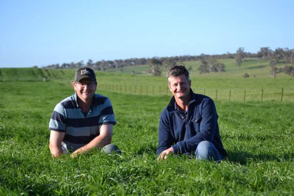 Taralga farmer Adrian Keith has used Knight Italian ryegrass to fill the winter feed gap on his family farm Pictured left with his brother Stuart