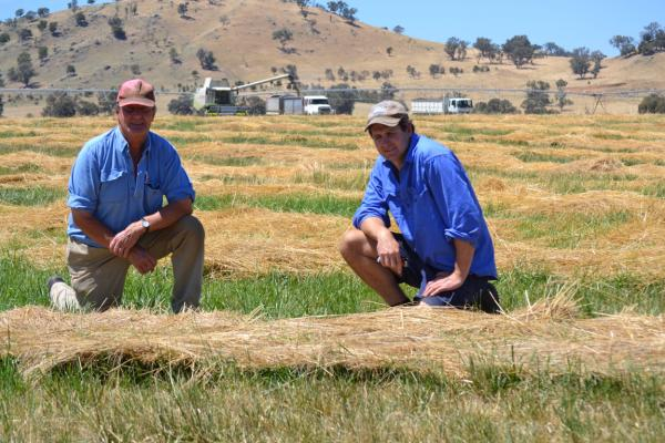 Steven Finlay and Andrew Landale from Holbrook are impressed with the new summer-active Hummer tall fescue.