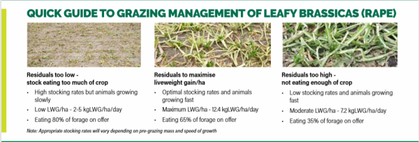 a quick guide to grazing management
