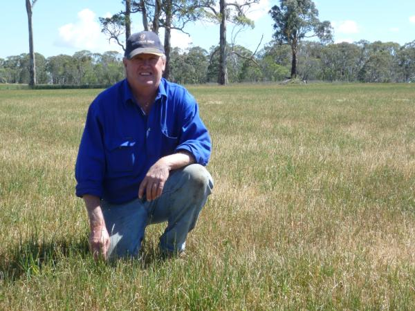 Bob Williamson, 'Neeworra', Guyra, has found Hummer tall fescue pastures well suited to the New England Tableland