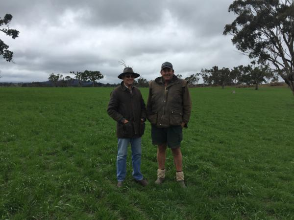 Neil Harvey and farm manager Stefan Botha in their Savvy pasture