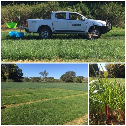 Bonville Trial Site | AusWest & Stephen Pasture Seeds