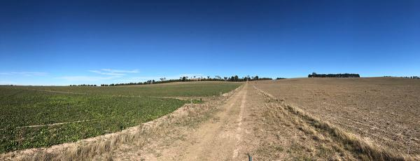 Hummer tall fescue (LHS) vs. native pasture (RHS) drought recovery, April 2019, NSW