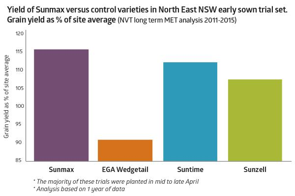 Sunmax wheat | AusWest & Stephen Pasture Seeds